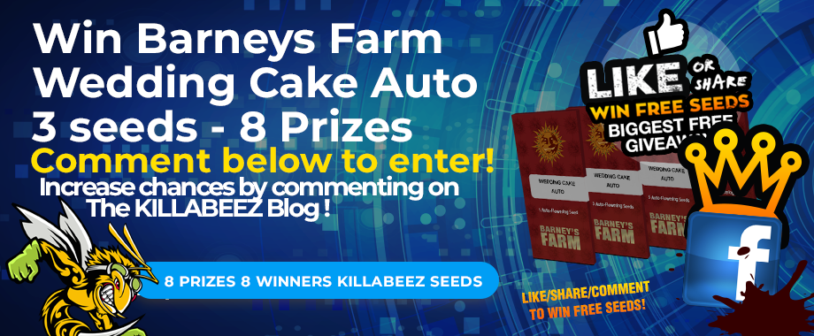 Win Barneys Farm Wedding Cake Auto